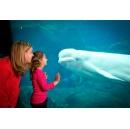 Georgia Aquarium Makes a Splash, Increasing Revenue from Email Marketing Campaigns 32 Percent with IBM Commerce