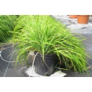 Mosquito-repelling chemicals identified in traditional sweetgrass