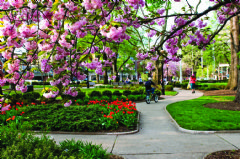 Morristown Green in the spring.