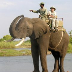 Carol Stevens rides elephant named Danny while on safari in Africa.
