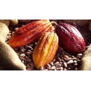 Mounting Evidence Demonstrates Improved Cognitive Function From Cocoa Flavanol Consumption