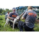 ASPCA Places Dogs Surrendered by Florida Rescue Group in 12 States Across U.S.