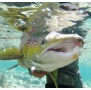 QC Report on Salmon Declines Reinforces Need for Government Consultation and Action