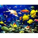 Scuba Diving in Playa del Carmen Boasts Spectacular Dive Sites