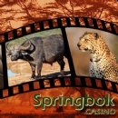 Freerolls and No-deposit Bonuses Highlight Springbok Casino�s �Big 5 Sundays� Tribute to South African Wildlife