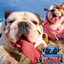 August Slots Tournaments at Liberty Slots  Award $500 in Daily Prizes