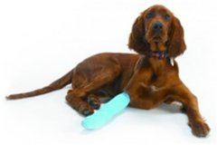 Pet Accident Claims