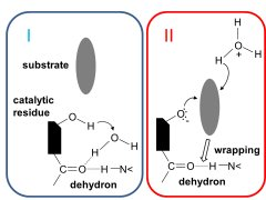 Dehydron as a two-stroke molecular engine sustaining enzyme catalysis by I) preparing solvent for catalysis and II) promoting substrate association.