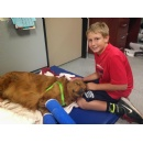 Help a Golden Retriever Heal from a �Golden Moment�