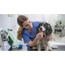 WikiVet And Mars Petcare Collaborate To Provide Online Veterinary Resources On Preventative Healthcare