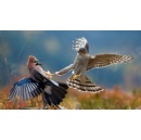 BigPicture: Natural World Photography Competition now open