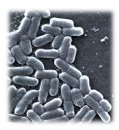 E. coli in the Home � It�s Not Just Found in Contaminated Foods